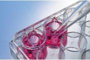 索莱宝细胞培养耗材