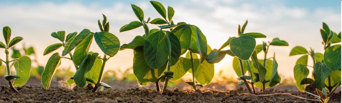 Agdia植物病害检测试剂